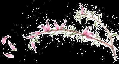Sacchetti-fotografa-fiore